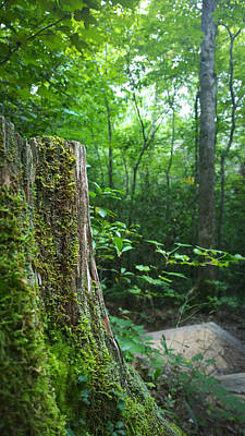 Photograph - Tree Stump In The Forest by Kelly Hazel