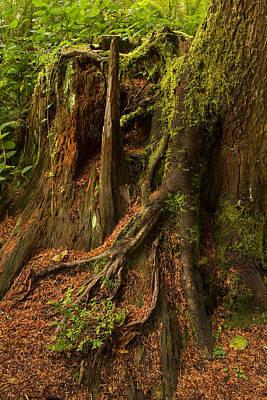 Red Roses - Tree Stump Mossy 1 by John Brueske