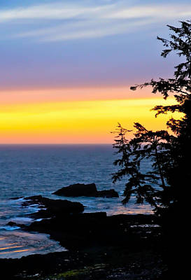 Photograph - Tree Sunset At The Coastline by Athena Mckinzie