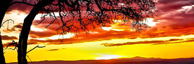 Photograph - Tree Sunset by Athena Mckinzie