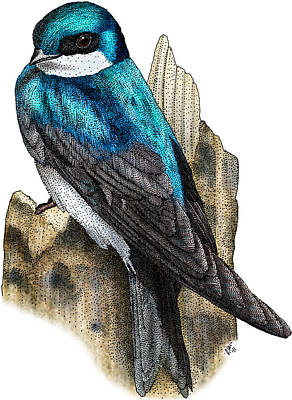 Photograph - Tree Swallow by Roger Hall