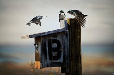 Photograph - Tree Swallows by Chris Lord