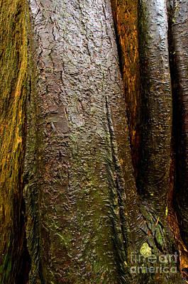 Frank Sinatra - Tree Texture 2 by Terry Elniski
