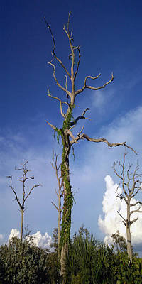 Photograph - Tree Three by Steve Sperry