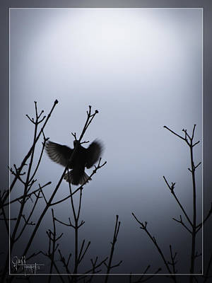 Photograph - Tree Top Landing by Glenn Feron