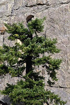 Randy Moss Photograph - Tree Topper by Randy Giesbrecht