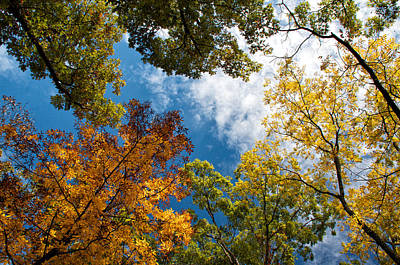 Photograph - Tree Tops Turning by Linda Shannon Morgan