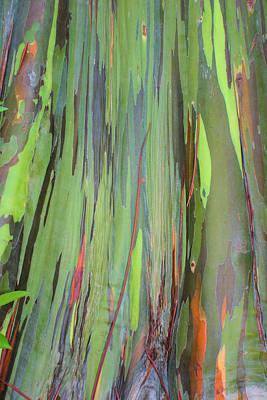 Photograph - Tree Trunk by Jane Girardot