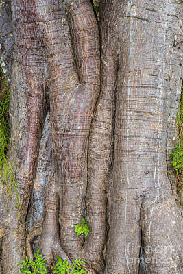 Photograph - Tree Trunk by Les Palenik