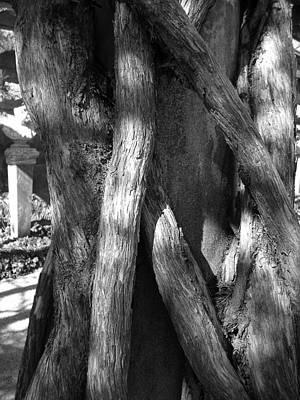 Photograph - Tree Trunk Series 01 by Carlos Diaz