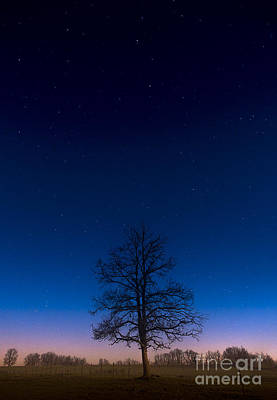 Photograph - Tree Under The Winter Stars by Tom Migot