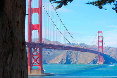 Photograph - Tree View Golden Gate by Holly Blunkall
