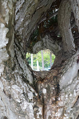 Photograph - Tree View by Rafael Salazar