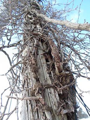 Photograph - Tree Vines by Jenna Mengersen