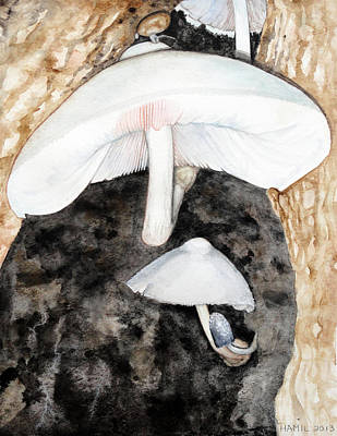 Tree Volvariella Mushroom Original