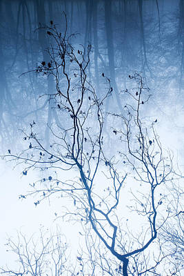 Tree Vs Forest Art Print