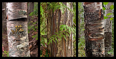 Photograph - Tree Wear By Nature by Sandi Mikuse