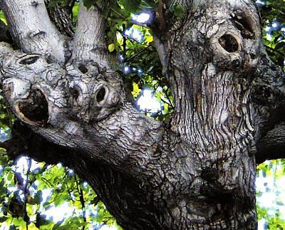 Tree With A Heart Art Print by Dan Twyman