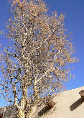 Photograph - Tree With Adobe by Laurel Powell