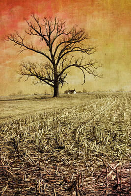 Laura James Photograph - Tree With Barn In Corn Field by Laura James
