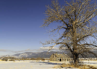 Art Print featuring the photograph Tree With Barn by Sue Smith