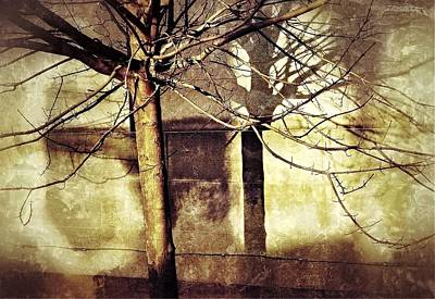 Photograph - Tree With Shadows by Mark Block