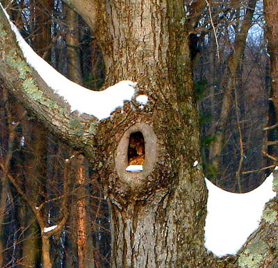 Tree With Snow Art Print by Mike McCool
