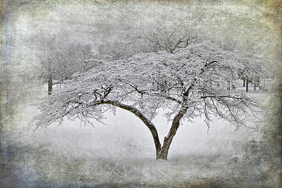 Photograph - Tree With Winter Snowfall At Garfield Park by Randall Nyhof