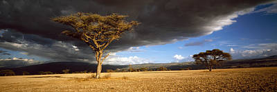 Tree W\storm Clouds Tanzania Print by Panoramic Images