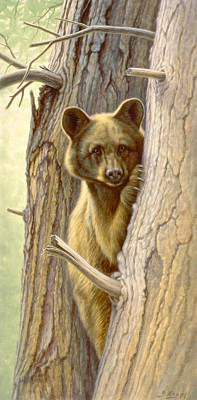 Bear Cub Painting - Treed by Paul Krapf
