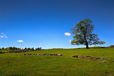 Photograph - Treeland by Robert Clifford