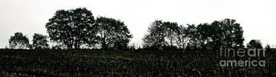 Treeline Original