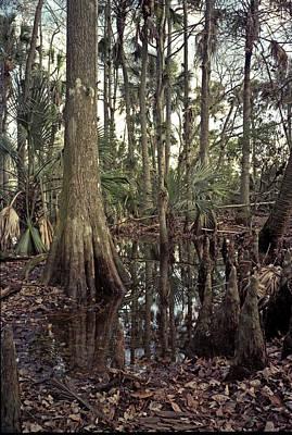 Photograph - Treeline. Triple N Ranch. by Chris  Kusik