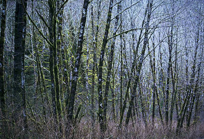 Photograph - Trees 2 by Belinda Greb