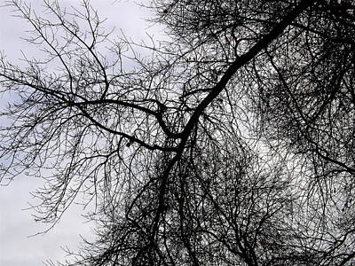 Airscape Photograph - Trees A by Claire McGee