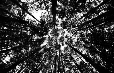 Print featuring the photograph Trees Above Me by Daniel Woodrum