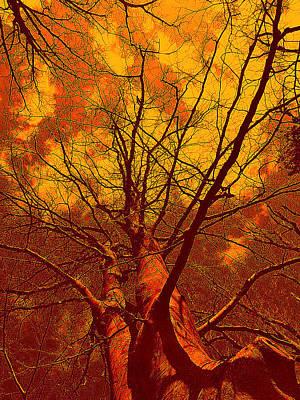 Art Print featuring the photograph Trees by Allen Beilschmidt