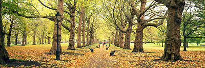Fallen Leaf Photograph - Trees Along A Footpath In A Park, Green by Panoramic Images