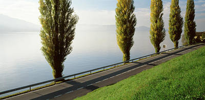 Trees Along A Lake, Lake Zug Art Print by Panoramic Images
