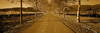 Winemaking Photograph - Trees Along A Road, Beaulieu Vineyard by Panoramic Images