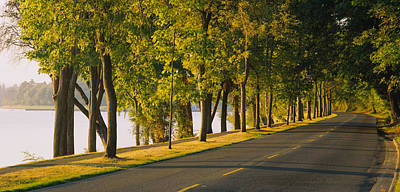 Markings Photograph - Trees Along A Road, Lake Washington by Panoramic Images