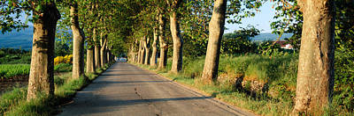 Provence Photograph - Trees Along A Road, Vaucluse, Provence by Panoramic Images