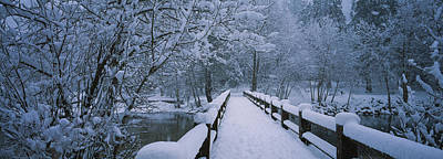 Trees Along A Snow Covered Footbridge Print by Panoramic Images