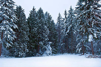 Cold Temperature Photograph - Trees Along A Snow Covered Road by Panoramic Images