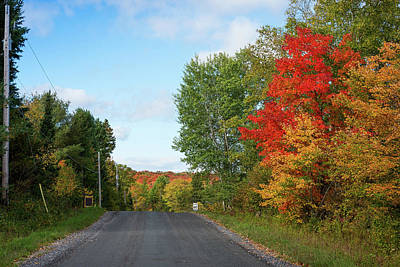 The Red Road Photograph - Trees Along Road In Autumn, Ontario by Panoramic Images