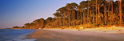 Beaufort Photograph - Trees Along The Shoreline, Hunting by Panoramic Images
