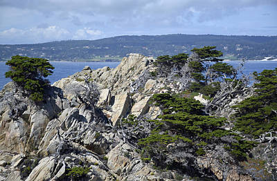 Point Lobos Reserve Photograph - Trees Amidst The Cliffs In California's Point Lobos State Natural Reserve by Bruce Gourley