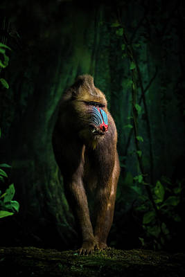 Ape Wall Art - Photograph - Trees And Beasts! by Isma Yunta