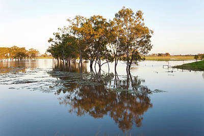 Floods Photograph - Trees And Flooded Creek by Peter Adams