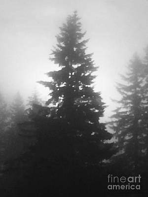 Impressionist Landscapes - Trees and Fog by Nick Gustafson
